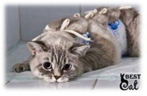 кошка-на-опперации