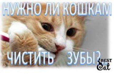 чистить-зубы-кошке-фото