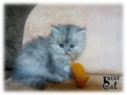 фото-котенок