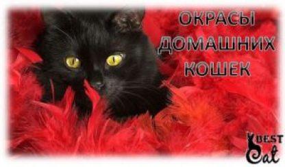 окрасы-кошек-фото