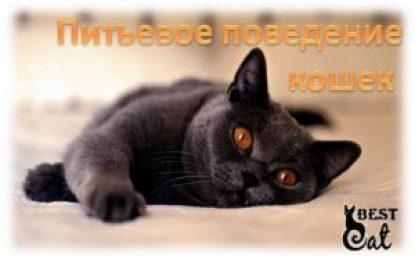 питьевое-поведение-кошек-фото