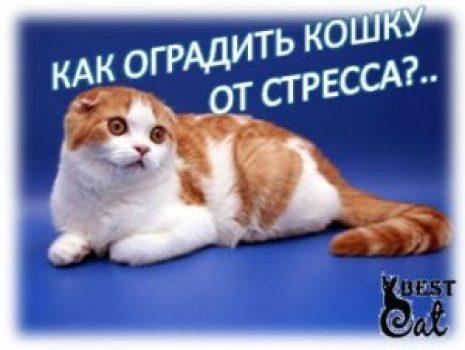 как-оградить-кошку-от-стресса-фото
