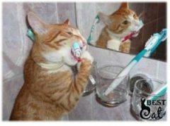 зубы-кошка-фото