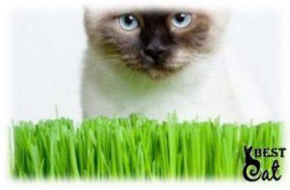 кошка-с-травой