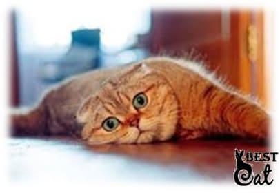 кот-рыжий-фото