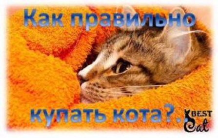 фото-кот