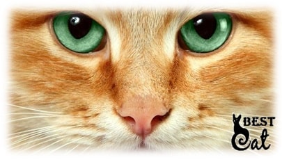 взгляд-кошки