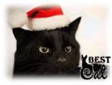 черная-кошка-фото