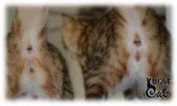 котята-на-фото