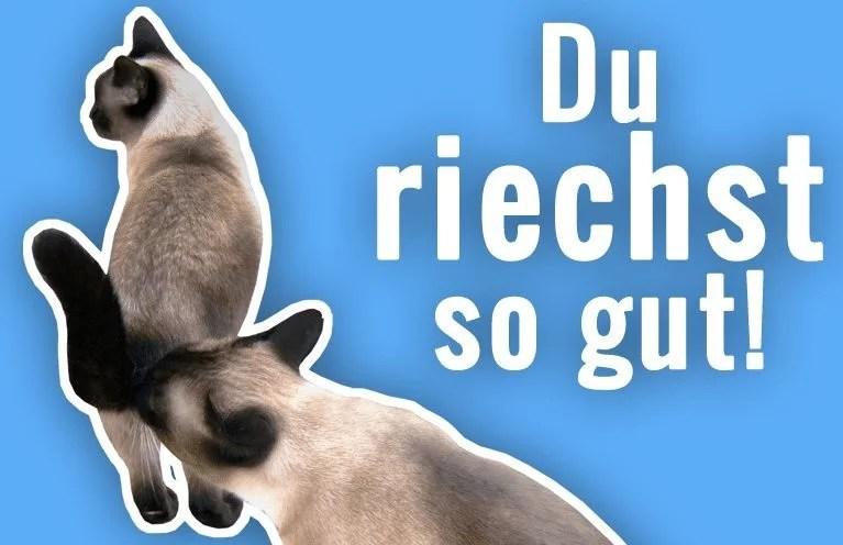 Warum Katzen Sich Gegenseitig Am Hintern Riechen