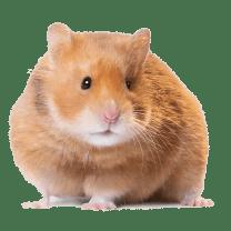 hamster peru