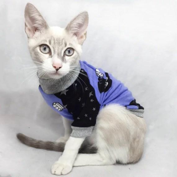 ropa para gatos lima peru miraflores surco