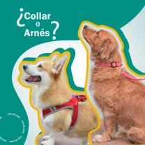 blog collar o arnes para perros, ¿cuál es mejor?