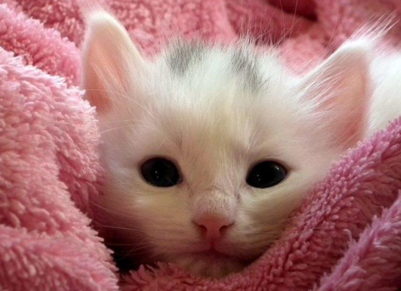 kitten nurseries
