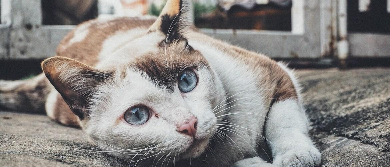 japan's cat islands
