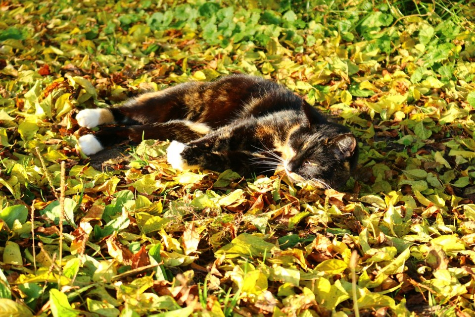 kitten falling leaves