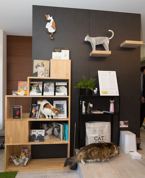 大和ハウスの住宅展示場が貓カフェ風にリニューアルオープンしたニャ | Cat Press