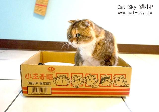 小王子麵箱做貓窩08.jpg