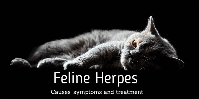 Feline Herpes Virus (Cat Flu) | Cat-World