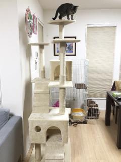 くーちゃんのキャットタワー