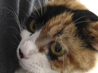 保護猫まーちゃん0046jpg