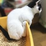 モーちゃんのトイレ風景01