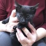 平岡さん黒猫2021062301