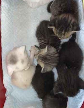 5匹の子猫20210924001
