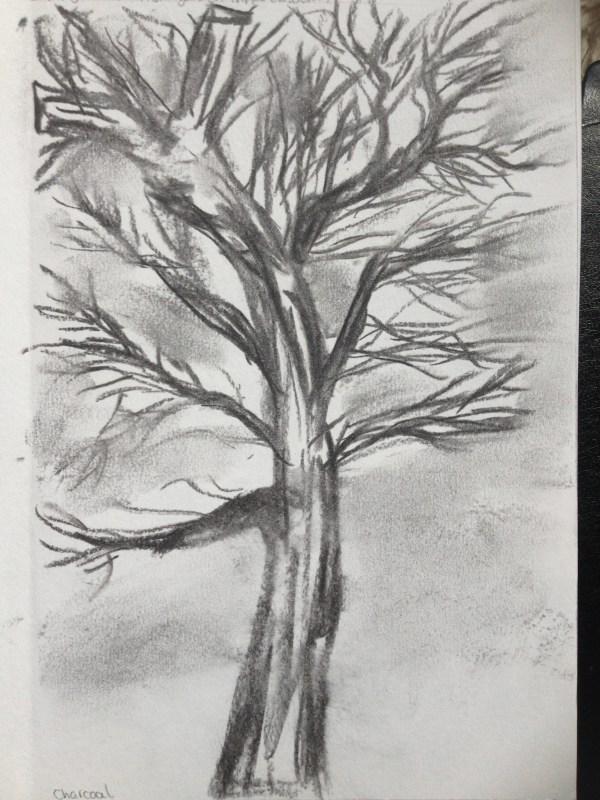 Sketching Individual Trees Drawing Skills