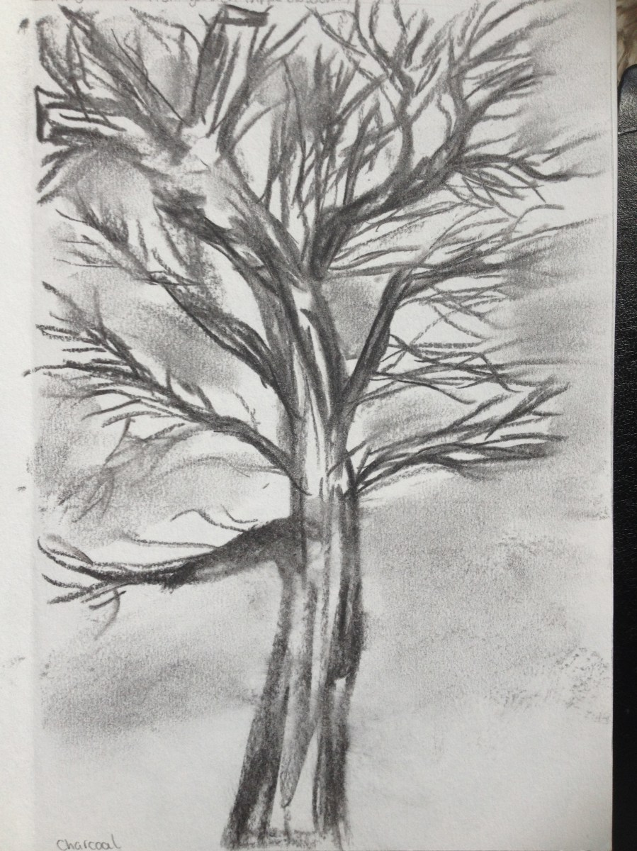 Sketching Individual Trees Drawing Skills