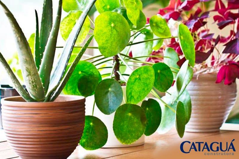 Conheca as melhores plantas para ambientes internos 1