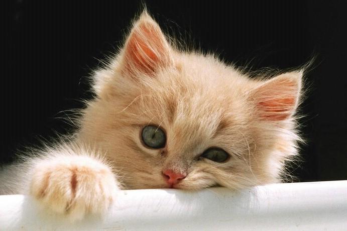 貓咪的體重 | 貓咪寫真