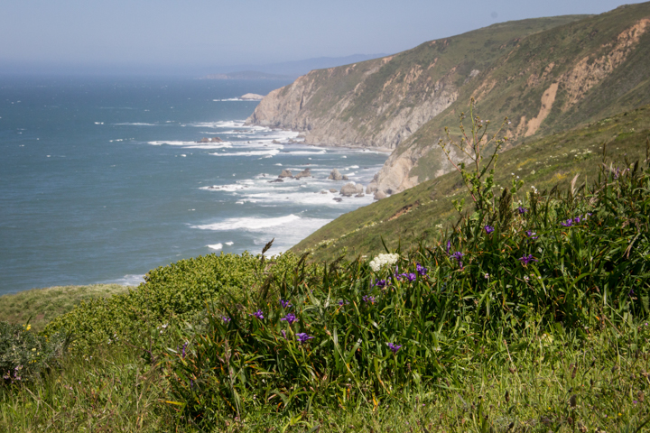 Wild Iris and cliffs of Point Reyes