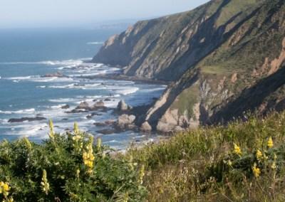 Point Reyes cliffs