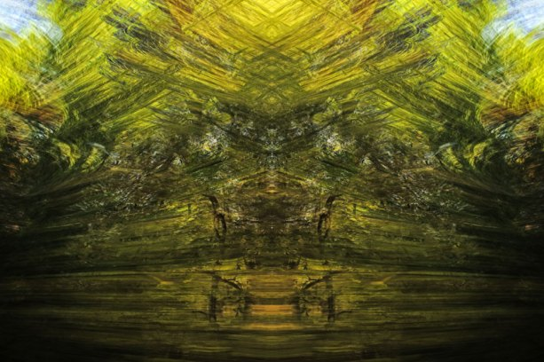 Tracing Forest Ghost VI (2011) 90 x 60 cm C-Print