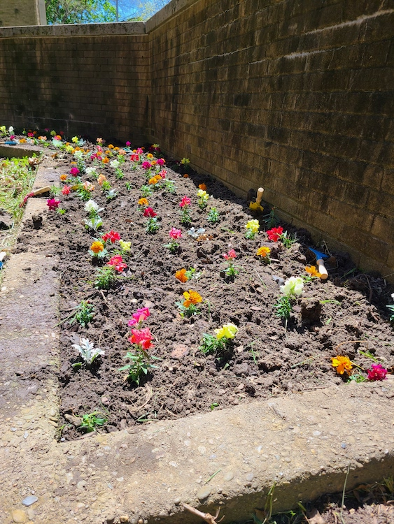 newly planted garden with wall at Catalyst Academy