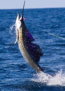 Tenerife Swordfish fishing, Tenerife Deep Sea Fishing