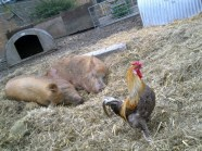 Hackney City Farm 2012