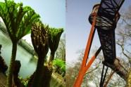 Kew Gardens – A Spring visit to Kew 2012