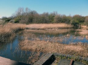Filter Beds, Lea Valley