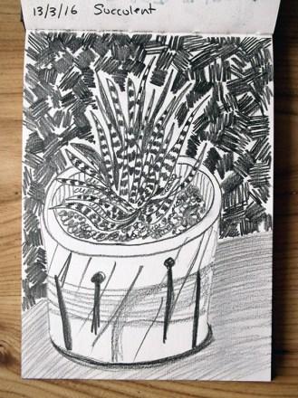 Succulent, pencil & marker pen,© Catherine Cronin