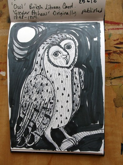 Owl, pen drawing © Catherine Cronin