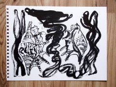 Shells ink drawing © Catherine Cronin