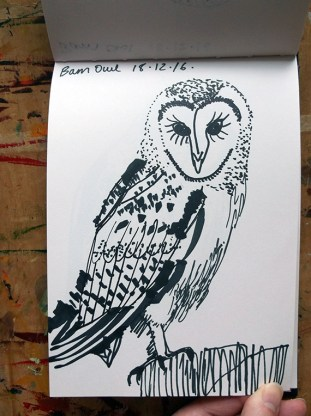 Barn Owl Sketch 2 © Catherine Cronin