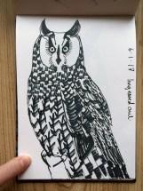 Long-eared Owl, black pen © Catherine Cronin