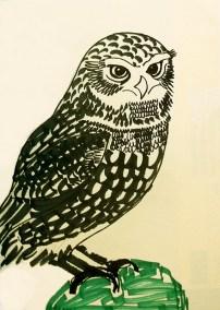 Little Owl, pen sketch, A4 © Catherine Cronin