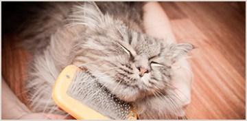 Дополнительные услуги: груминг, вычесывание, стрижка кошек и т.д.
