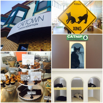 Catown Cafe