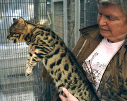 Jean Mill with one of her Bengal cat