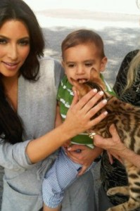 Kim Kardashian with a Bengal cat from Cattery